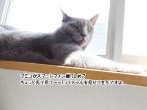 マミコがスマートフォン握りしめて ちょっと見て見てーー!って メールを見せてきたですよ。