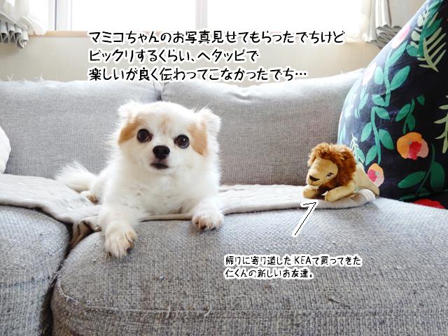 マミコちゃんのお写真見せてもらったでちけどビックリするくらい、ヘタッピで楽しいが良く伝わってこなかったでち…
