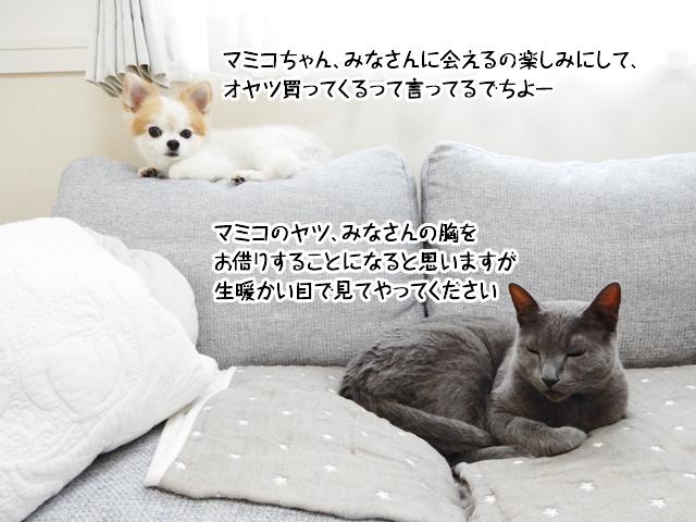 マミコちゃん、みなさんに会えるの楽しみにして、 オヤツ買ってくるって言ってるでちよー!マミコのヤツ、みなさんの胸を お借りすることになると思いますが 生暖かい目で見てやってください