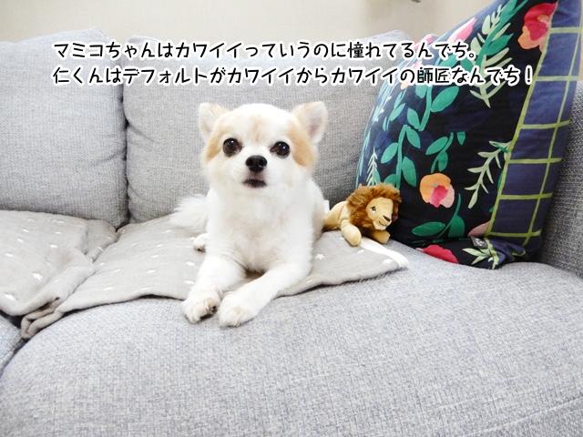 マミコちゃんはカワイイっていうのに憧れてるんでち。仁くんはデフォルトがカワイイからカワイイの師匠なんでち!