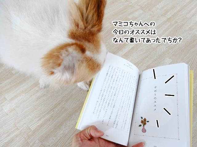 マミコちゃんへの今日のオススメは何て書いてあったでちか?