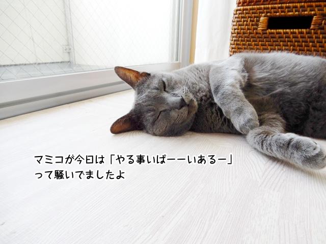 マミコが今日は「やる事いぱーーいあるー」って騒いでましたよ