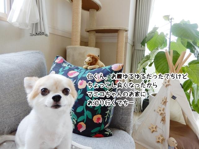 仁くん、お腹ゆるゆるだったでちけど ちょっこし良くなったから マミコちゃんのお家に お泊り行くでちー