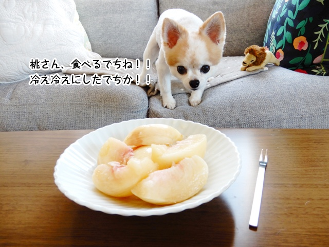 桃さん、食べるでちね!!冷え冷えにしたでちか!!