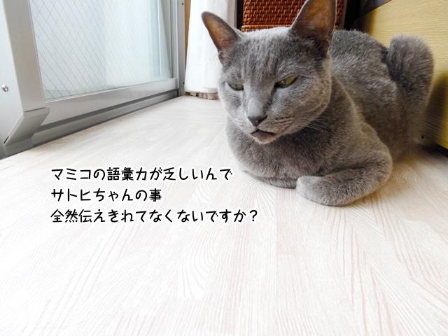 マミコの語彙力が乏しいんでサトヒちゃんの事全然伝えきれてなくないですか?
