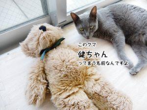 このクマ、健ちゃんって言うんですよ。