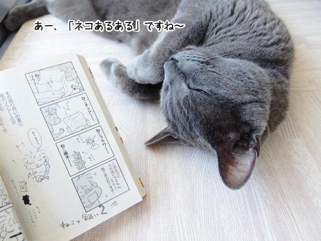 あー、「ネコあるある」ですね〜