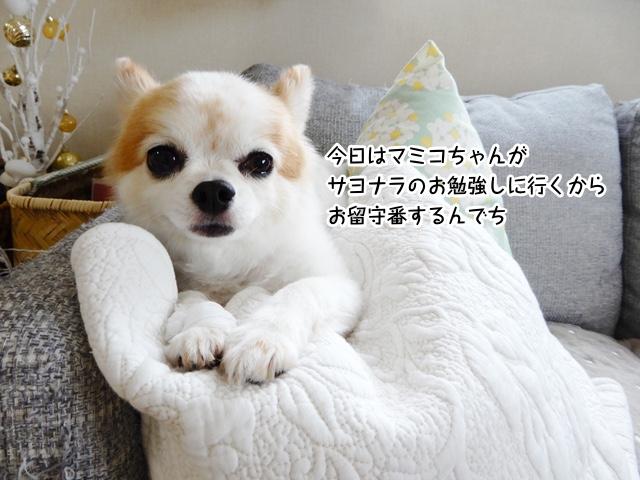 今日はマミコちゃんが サヨナラのお勉強しに行くから お留守番するんでち