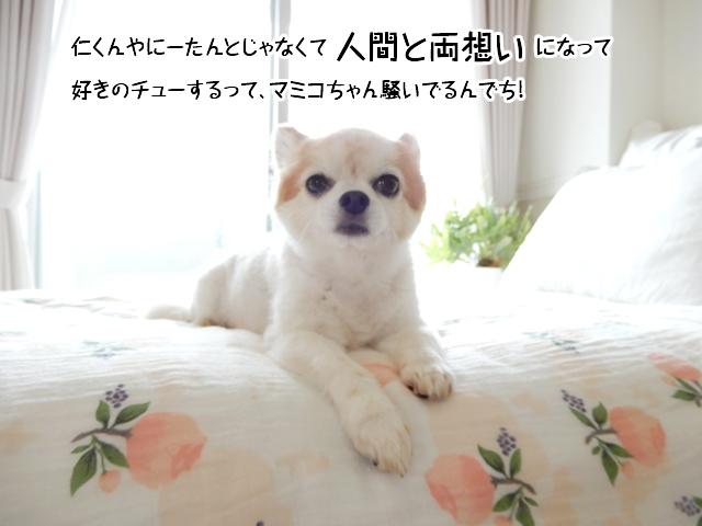 仁くんやにーたんとじゃなくて人間と両想いになって、好きのチューするって、マミコちゃん騒いでるんでち!