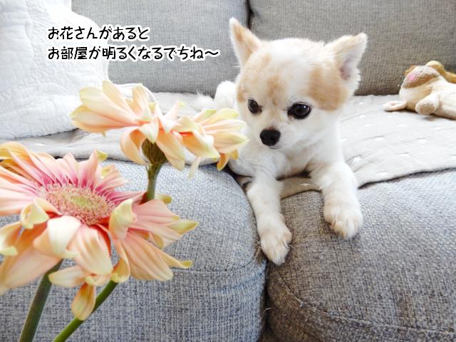 お花さんがあるとお部屋が明るくなるでちね~