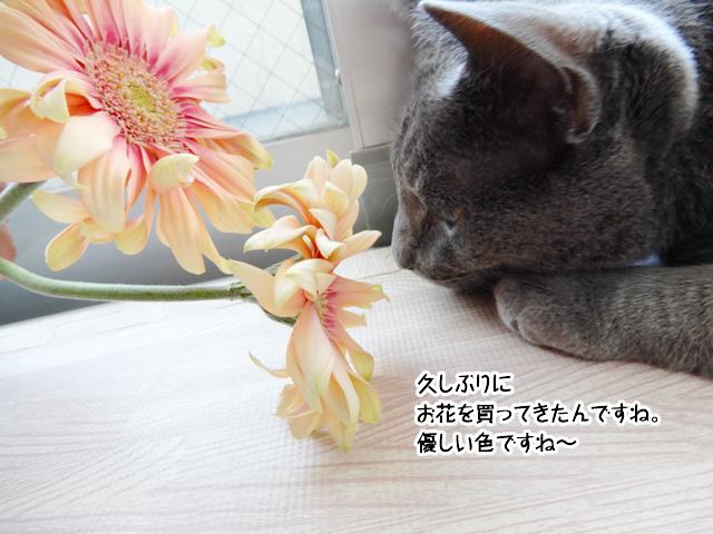 久しぶりに お花を買ってきたんですね。 優しい色ですね~