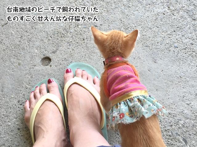 台南地域のビーチで飼われていたものすごく甘えん坊な仔猫ちゃん