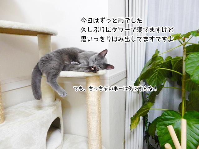 今日はずっと雨でした 久しぶりにタワーで寝てますけど 思いっきりはみ出してますですよ