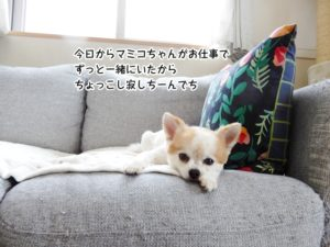 今日からマミコちゃんがお仕事で ずっと一緒にいたから ちょっこし寂しちーんでち