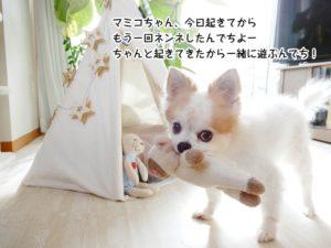 マミコちゃん、起きてきたのにもう一回ネンネしたんでちよー。で、ちゃんと起きてきたから一緒に遊ぶんでち!