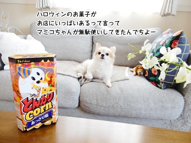 ハロウィンのお菓子がお店にいっぱいあるって言って マミコちゃんが無駄使いしてきたんでちよー