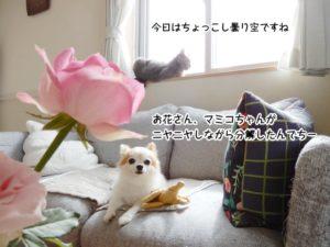 お花さん、マミコちゃんが ニヤニヤしながら分解したんでちー