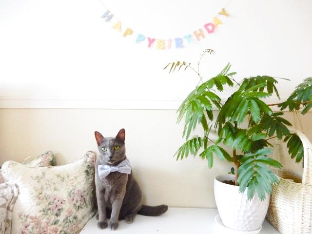今日はお誕生日