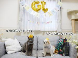 ギンちゃんは11歳・仁くんは10歳のお誕生日を迎えました