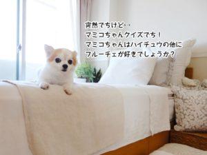 突然でちけど… マミコちゃんクイズでち! マミコちゃんはハイチュウの他に フルーチェが好きでしょうか?