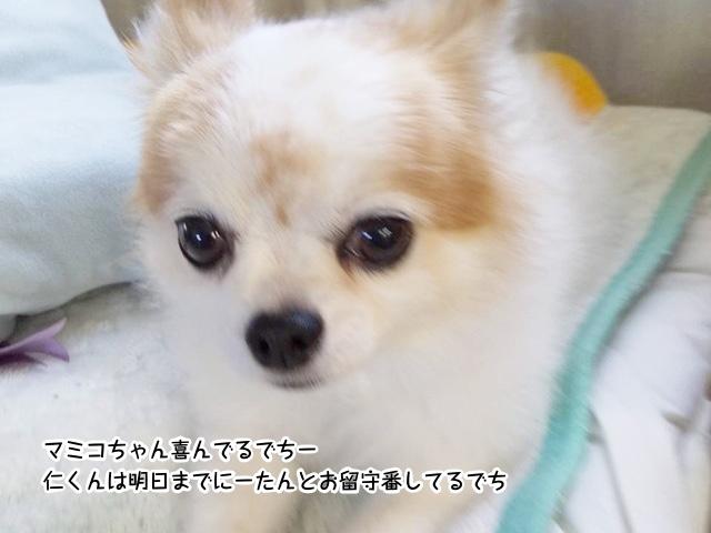 マミコちゃん喜んでるでちー 仁くんは明日までにーたんとお留守番してるでち