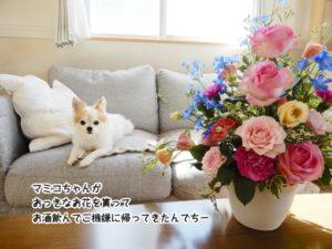 マミコちゃんが おっきなお花を貰って お酒飲んでご機嫌に帰ってきたんでちー