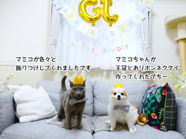 マミコちゃんが王冠とおリボンネクタイ作ってくれたでちー。 色々と飾り付けしてくれましたです