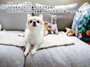 こにちはーーー! 今日はもわーんって暑かったでちよねー 今日はマミコちゃんの恋話聞かせてくれるって言ってたでちよー