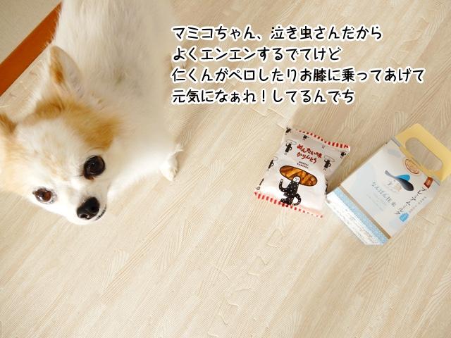 マミコちゃん、泣き虫さんだからよくエンエンするでてけど、仁くんがペロしたりお膝に乗ってあげて、元気になぁれ!してるんでち