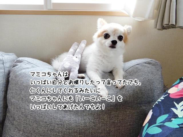 マミコちゃんは いっぱい自分とお喋りしたって言ってたでち。 仁くんにしてくれるみたいに マミコちゃんにも「いーこいーこ」を いっぱいしてあげたんでちよ!