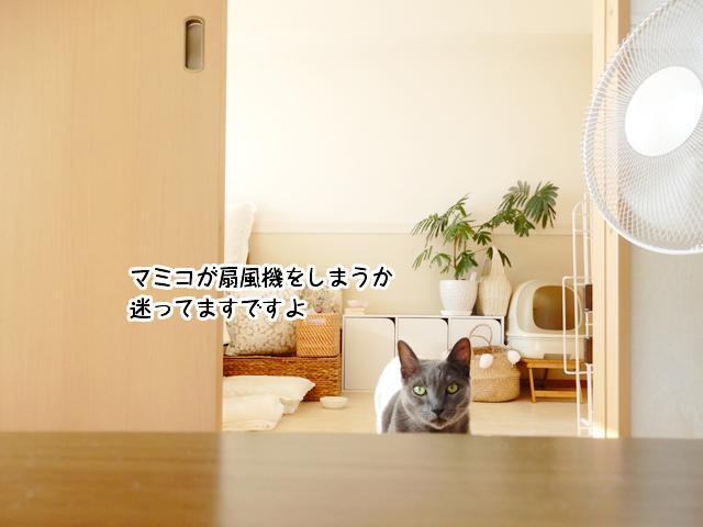 マミコが扇風機をしまうか 迷ってますですよ
