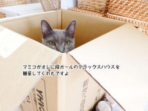 マミコがオレに段ボールのデラックスハウスを 贈呈してくれたですよ