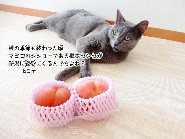 桃の季節も終わった頃マミコのシショーである根本センセが新潟に遊びにくるんでちよね?