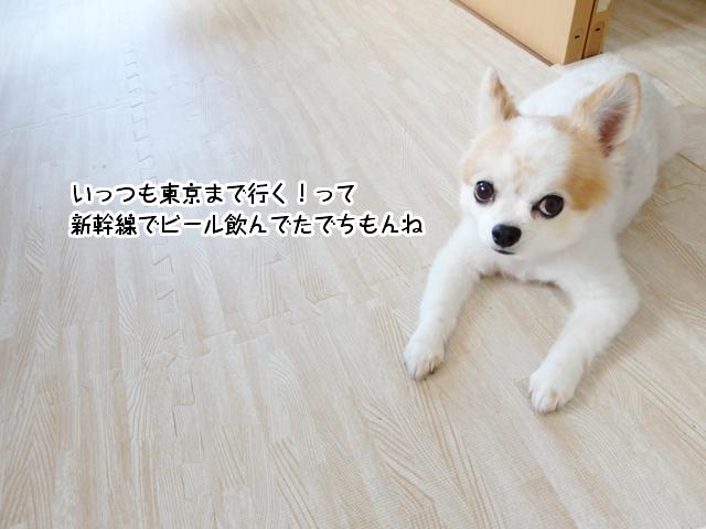 いっつも東京まで行く!って新幹線でビール飲んでたでちもんね