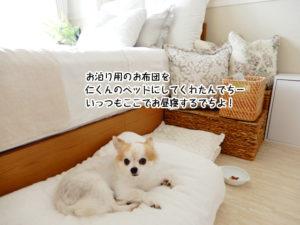 お泊り用のお布団を 仁くんのベッドにしてくれたんでちー いっつもここでお昼寝するでちよ!