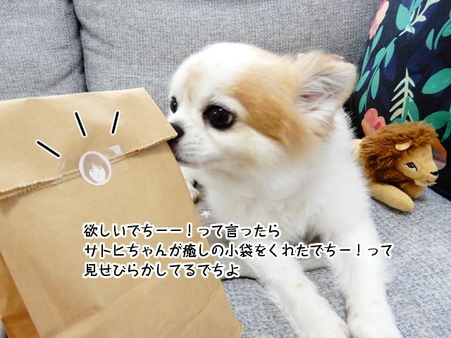 欲しいでちーー!って言ったらサトヒちゃんが癒しの小袋をくれたでちー!って見せびらかしてるでちよ