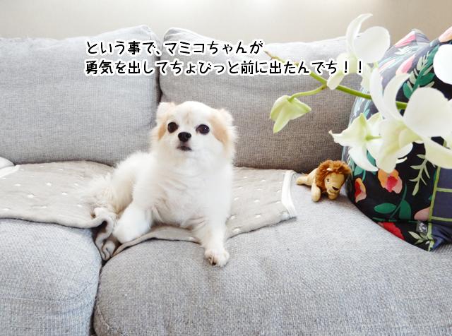 という事で、マミコちゃんが勇気を出してちょびっと前に出たんでち!!