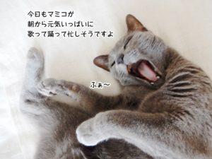 今日もマミコが 朝から元気いっぱいに 歌って踊って忙しそうですよ