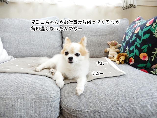 マミコちゃんがお仕事から帰ってくるのが毎日遅くなったんでちー