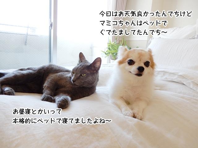 今日はお天気良かったんでちけどマミコちゃんはベッドでぐでたましてたんでち〜。お昼寝とか言って本格的にベッドで寝てましたよね〜