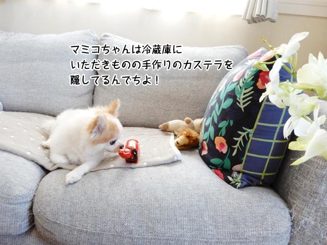 マミコちゃんは冷蔵庫に いただきものの手作りのカステラを 隠してるんでちよ!