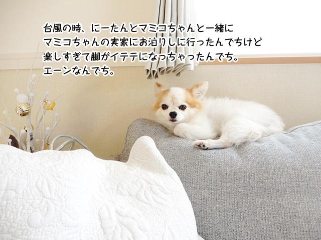 台風の時、にーたんとマミコちゃんと一緒に マミコちゃんの実家にお泊りしに行ったんでちけど 楽しすぎて脚がイテテになっちゃったんでち。 エーンなんでち。