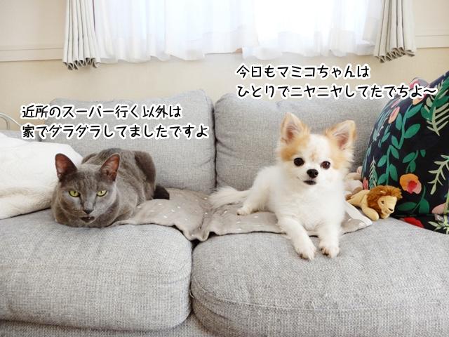 今日もマミコちゃんはひとりでニヤニヤしてたでちよ〜。近所のスーパー行く以外は 家でダラダラしてましたですよ