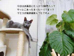 今日はお風呂にたっぷり2時間入って やっとこあったまった〜って言って マミコが風邪薬飲んでたですよ。