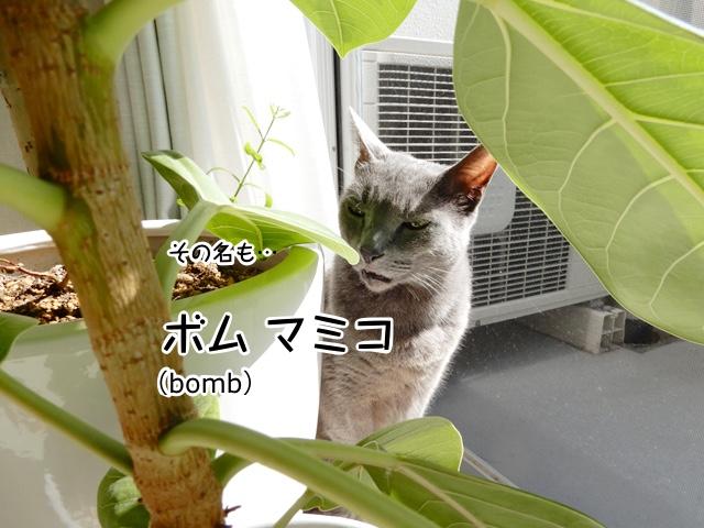 その名も「bomb マミコ」