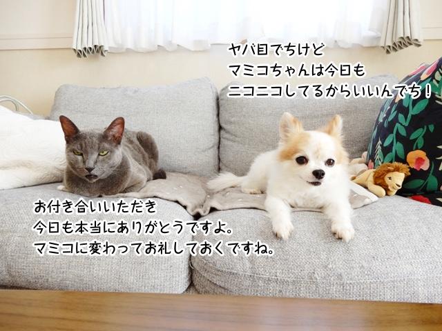 ヤバ目でちけどマミコちゃんは今日もニコニコしてるからいいんでち! お付き合いいただき今日も本当にありがとうですよ。マミコに変わってお礼しておくですね。