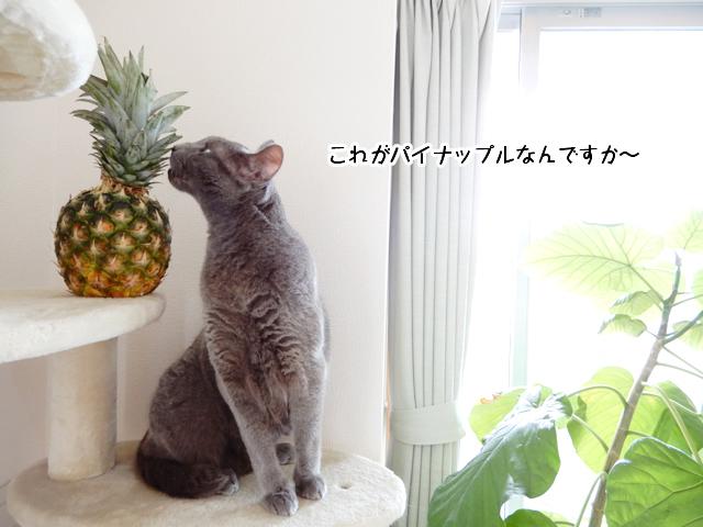 これがパイナップルなんですか~