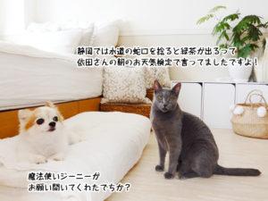 静岡では水道の蛇口を捻ると緑茶が出るって 依田さんの朝のお天気検定で言ってましたですよ!魔法使いジーニーが お願い聞いてくれたでちか?