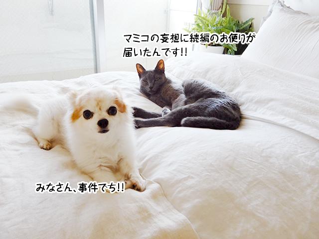 みなさん、事件でち!!マミコの妄想に続編のお便りが 届いたんです!!