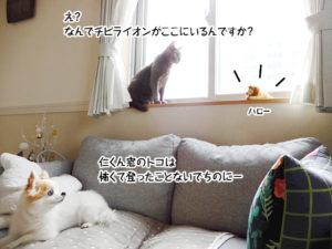 え? なんでチビライオンがここにいるんですか?仁くん窓のトコは 怖くて登ったことないでちのにー